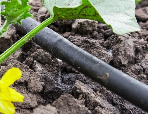 What is a Drip Irrigation System, and Do I Need One?